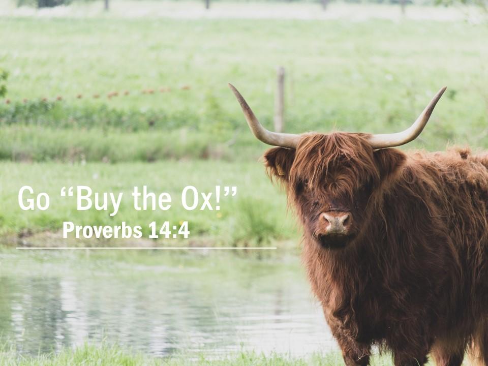 """Go """"Buy the Ox!"""""""